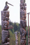 All Canada Photos (F1 Online) - Gitanyow, Gitxsan, Zeder