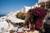First Light (F1 Online) - Bougainvillea flowers in Oia Village, Santorini, Greece