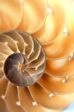Alaskastock RM (F1 Online) - Selective focus close up of a cut nautilus shell.